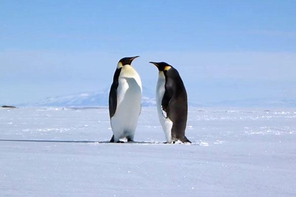 Международно-правовой режим Антарктики